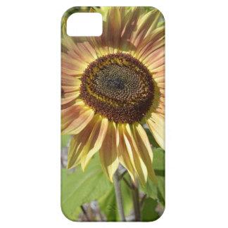 Sunflower Garden iPhone4 Case iPhone 5 Cases