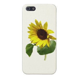 Sunflower Gazing Down Case For iPhone 5