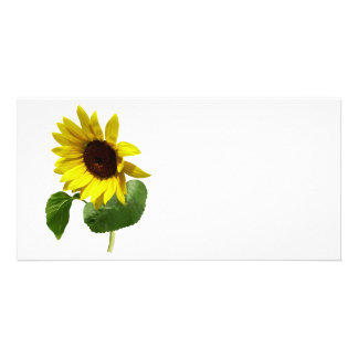Sunflower Gazing Down Customized Photo Card
