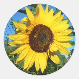 Sunflower Giant Round Sticker   Bright Yellow Blue