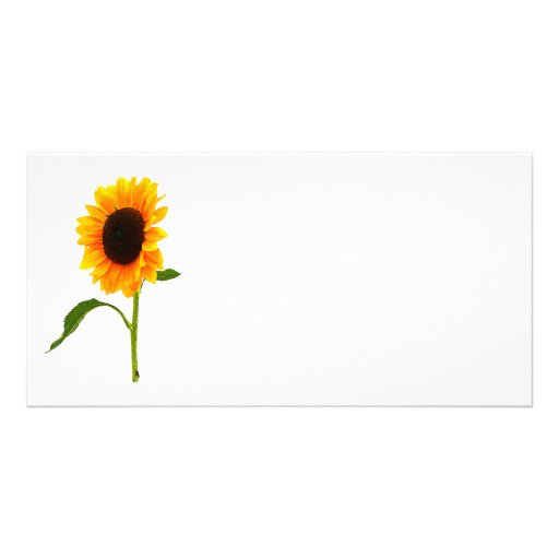 Sunflower Gives a Hand Photo Card