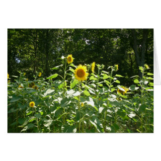 SunFlower Greeting Card by Lorette Starr