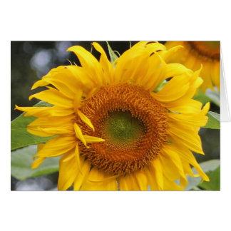 Sunflower Greeting Card Design FIve