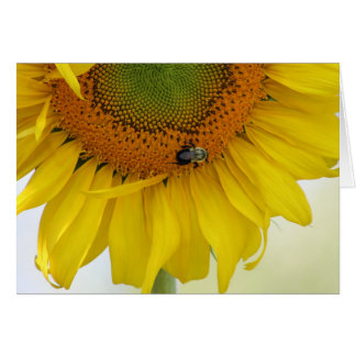 Sunflower Greeting Card Design Three