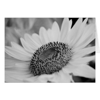 Sunflower Greeting Greeting Card