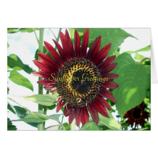 Sunflower Greetings Greeting Cards