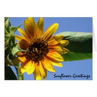 Sunflower Greetings Cards
