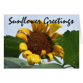 Sunflower Greetings Greeting Card