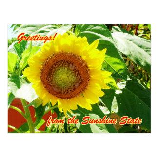 Sunflower greetings! postcard
