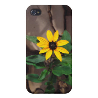 Sunflower growing from Cracked Mud iPhone 4/4S Case
