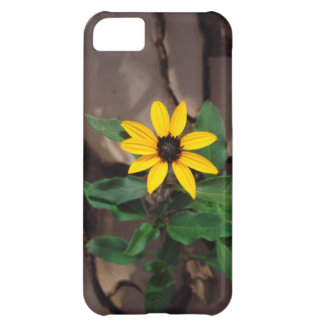 Sunflower growing from Cracked Mud iPhone 5C Case