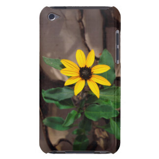 Sunflower growing from Cracked Mud iPod Case-Mate Case