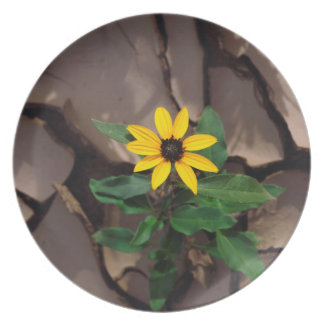 Sunflower growing from Cracked Mud Plate