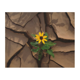 Sunflower growing from Cracked Mud Wood Wall Art