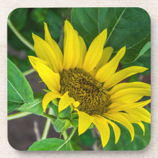 Sunflower hard plastic coasters