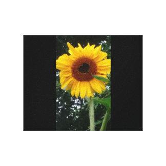 Sunflower Heart Canvas Print