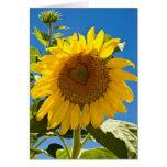 Sunflower Heart Cards