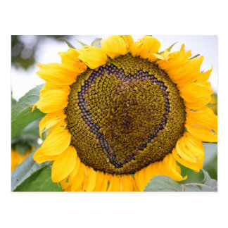 Sunflower Heart - post card