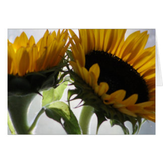 sunflower ii card