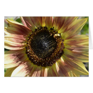 Sunflower in Autumn  Card