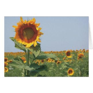 sunflower in field of sunflowers card