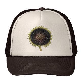 Sunflower In Full Bloom Cap