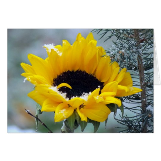 Sunflower in the Snow Get Well Card