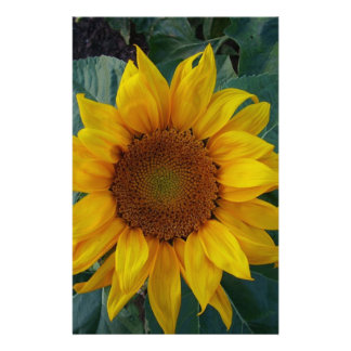 Sunflower in the Spring Stationery