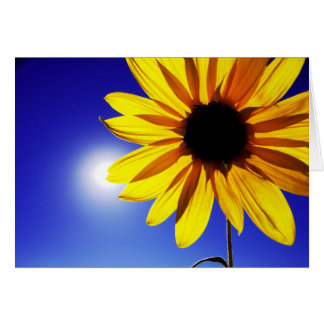 Sunflower in the Sun Greeting Card
