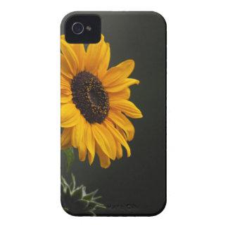Sunflower iPhone 4 Case Mate CAse