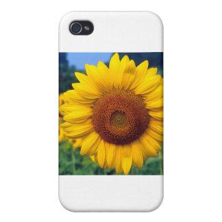 Sunflower iPhone 4 Cases
