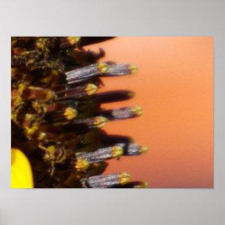 Sunflower Macro Poster