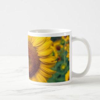 Sunflower Coffee Mugs