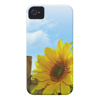 Sunflower Nature Beauty Case-Mate iPhone 4 Cases