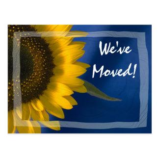 Sunflower on Blue Change of Address Postcard