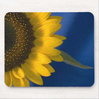 Sunflower on Blue Mouse Mat