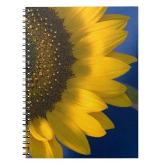 Sunflower on Blue Notebook