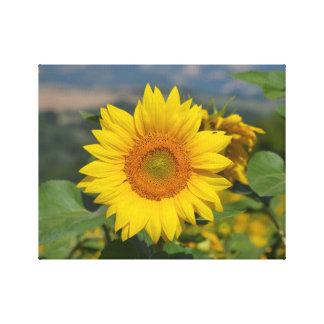 Sunflower on canvas canvas print