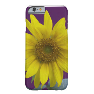 Sunflower on Purple Barely There iPhone 6 Case