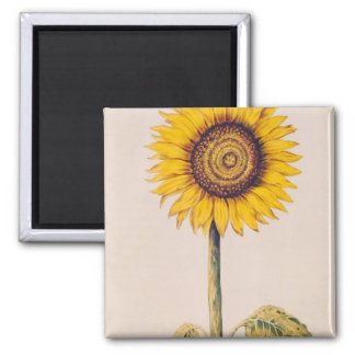 Sunflower or Helianthus Magnet