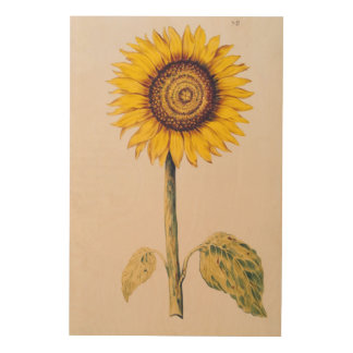 Sunflower or Helianthus Wood Print