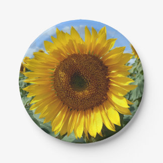 Sunflower Paper Plates 7 Inch Paper Plate