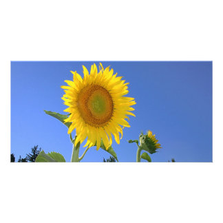 Sunflower Personalized Photo Card