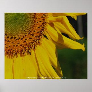 Sunflower Petals Flower Photography Poster Print