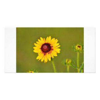 Sunflower Photo Card