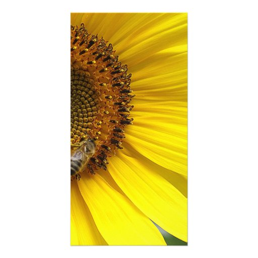 Sunflower Custom Photo Card