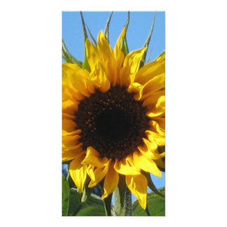 Sunflower - Photo Card 4'' x 8''