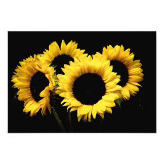 SUNFLOWER PHOTO POSTER
