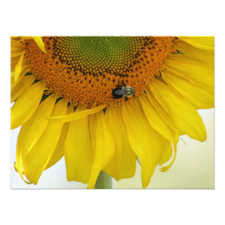 Sunflower Photo Print Design #1