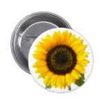 Sunflower Pinback Buttons